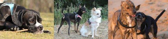 Tre Ponti voor kleine en medium honden