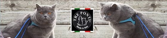 Tre Ponti for cats