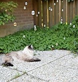 Crazy Cat Fun Bubbles
