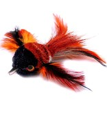 Tabby Tijger Hummingbird (Kolibrie)