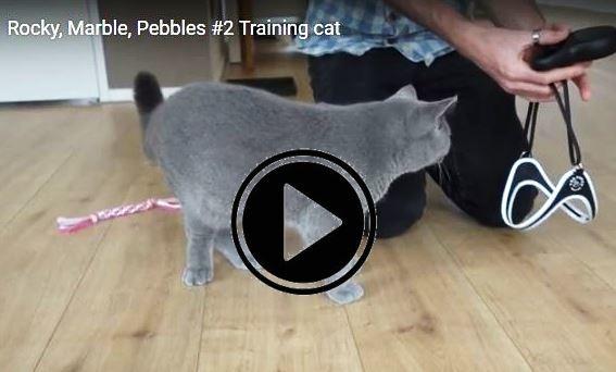 Training kattentuigje Vivianne