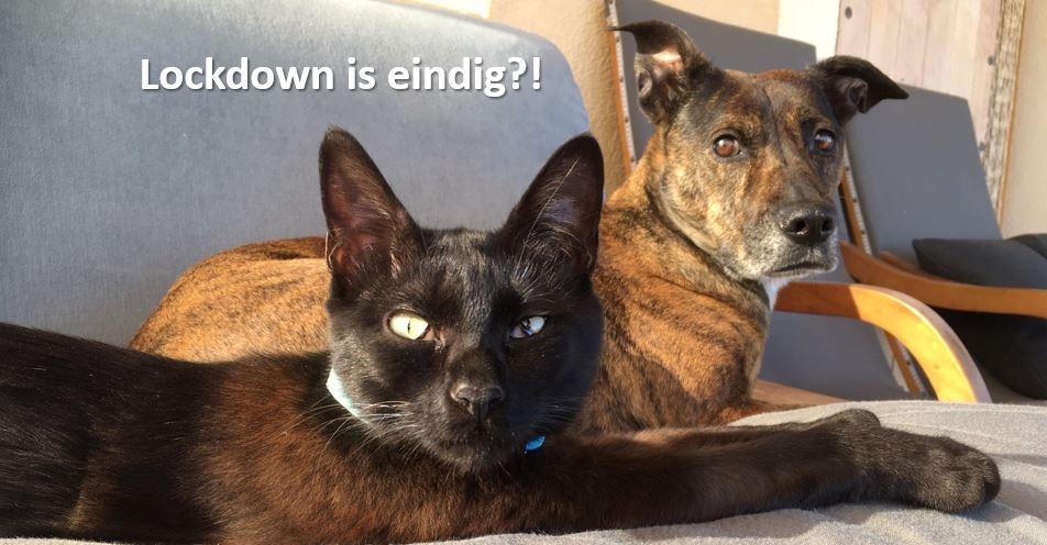 Vermijd Post-Lockdown-Stress bij uw dier!