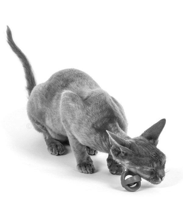 Crazy Cat Wacky Wobbler - ZipNip