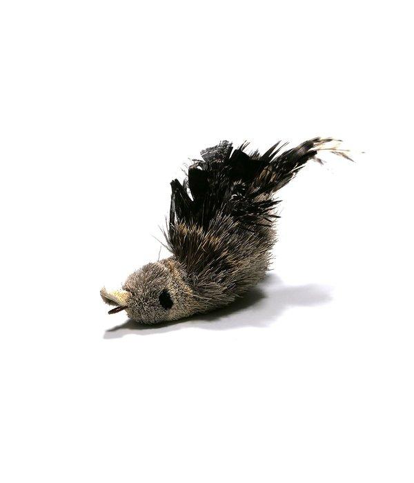 Tabby Tijger Woodpecker (Specht)