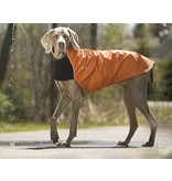 Chilly Dogs TRAIL BLAZER- Greyhound / Long & Lean breeds