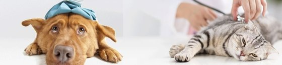 Steun het KankerFonds voor Dieren