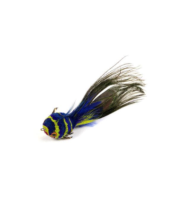 Tabby Tijger Rainbow Fish (Regenboogvisje)