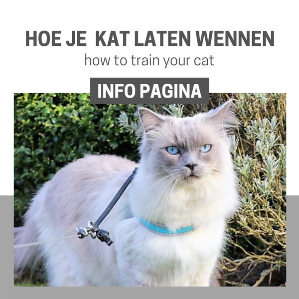 Info Pagina: Training tuigje