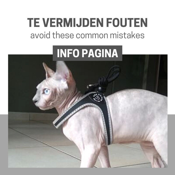 Info Page: Mistakes to avoid when walking your cat with a cat harness