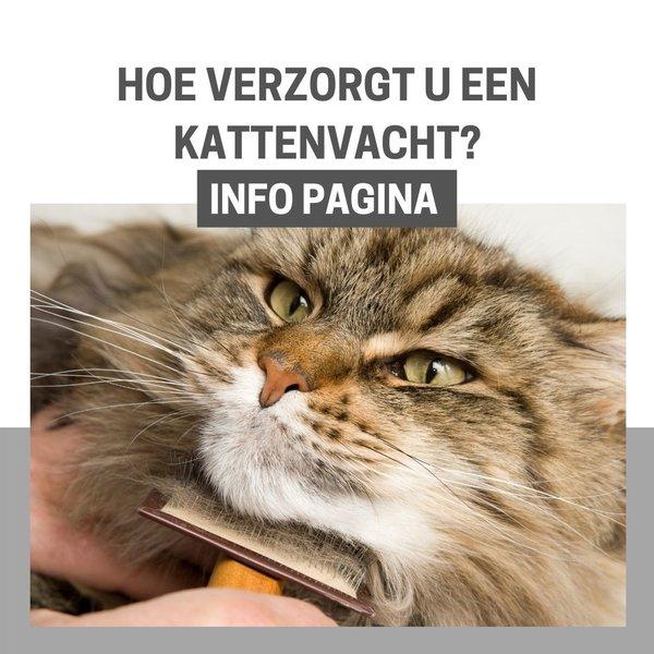 INFO: Welke kam of borstel hebt u nodig voor uw kat?