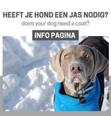 INFO: Does my dog need a coat?