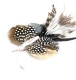 Tabby Tijger Long-tailed Butterfly (Langstaart vlinder)