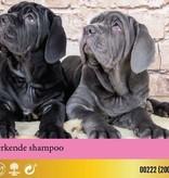 Petuxe Shampoo Black Hair