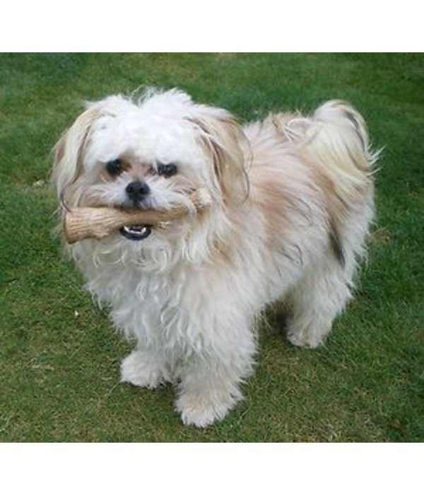 Petstages Durable stick - Dogwood