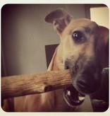 Petstages Durable stick