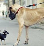 WAW Easy Dog Walk