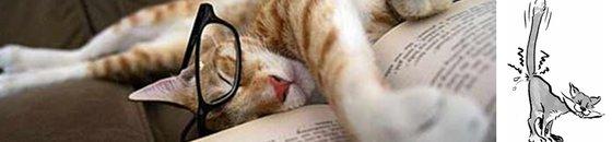Boeken kattengedrag