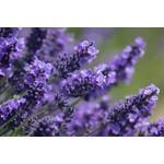 Lavendelproducten