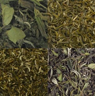 Witte thee proefpakket