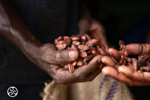 Chocolade druppels puur Callebaut 80%
