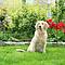 Gallagher Gallagher honden en kattenschrikdraad starter kit M35 voor huis en tuin (230V)
