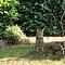 Gallagher Gallagher honden en katten tuin kit, complete schrikdraad set voor in de tuin (80 cm)