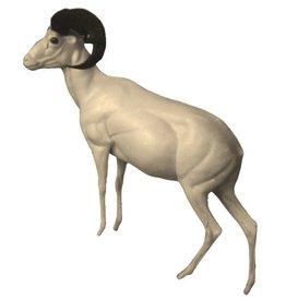 Mouflon Standing Uphill Small to Medium