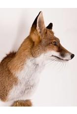 Bouten Venlo Fox Large