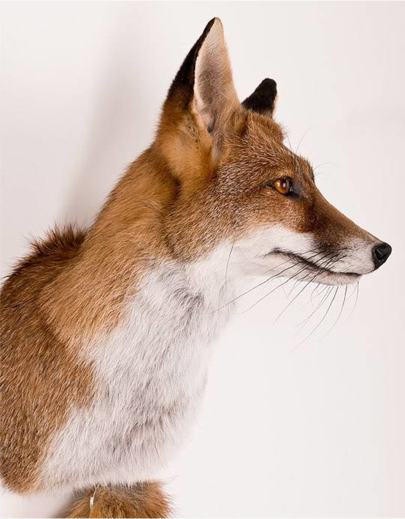 Bouten Venlo Fuchs Groß