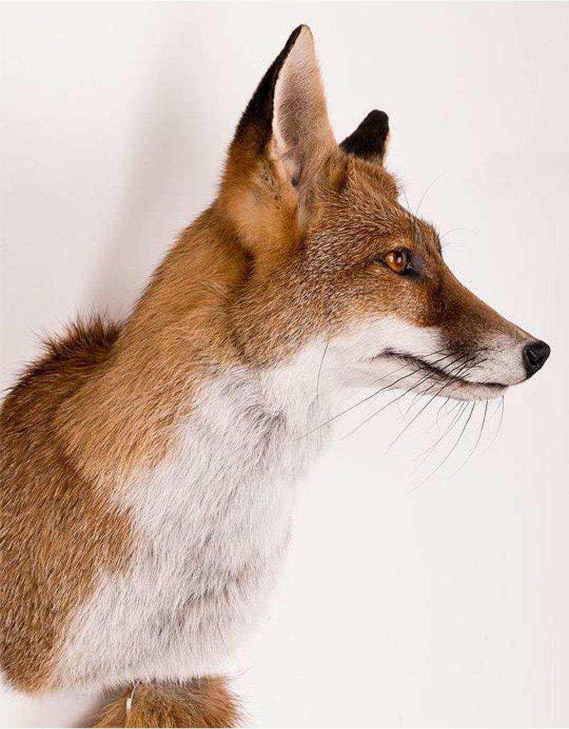 Bouten Venlo Fox Medium