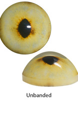 Luchs Augen