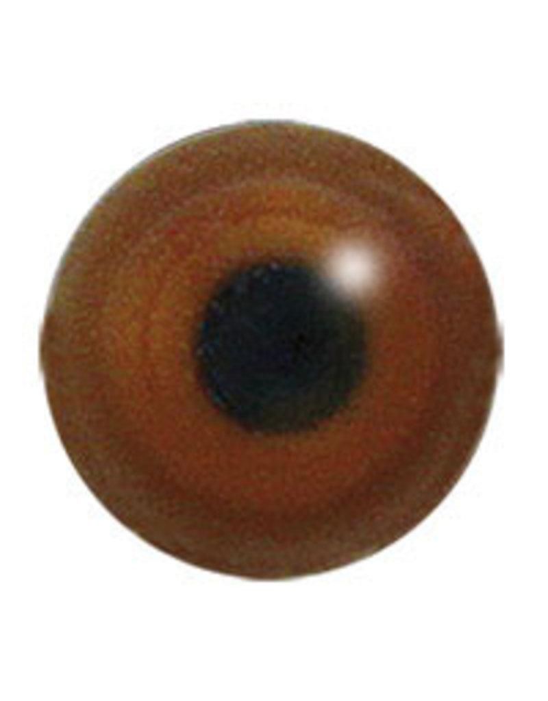 Black Wheatear (Oenanthe leucura)