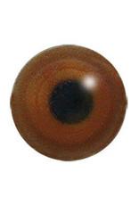 Gryllteiste (Cepphus grylle)