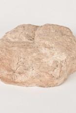 Rots Small Bruin