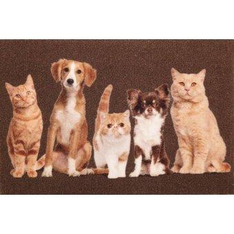 Deurmat foto katten en honden