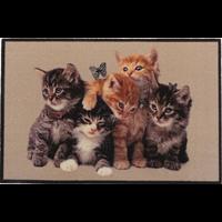 Deurmat foto kittens