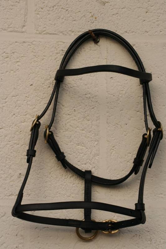 leather show headcollar