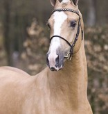 Ponytrends Show bridle leather , stallion/mare