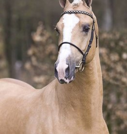 Ponytrends Show bridle leather,  stallion/mare