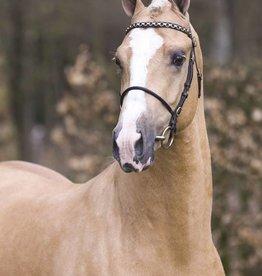 Ponytrends Show hoofdstel leder merrie / hengst