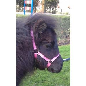 HB Foal headcollar