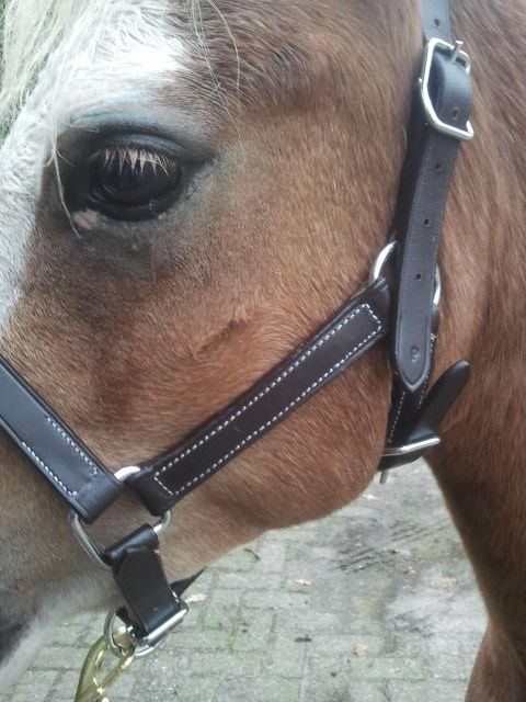Ponytrends Leather headcollar the luxe
