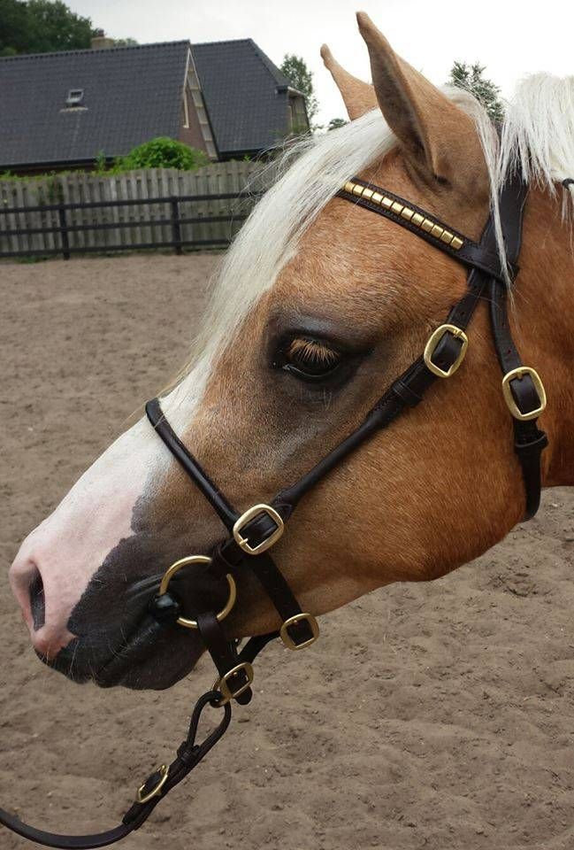Ponytrends Show bridle leather round stitched
