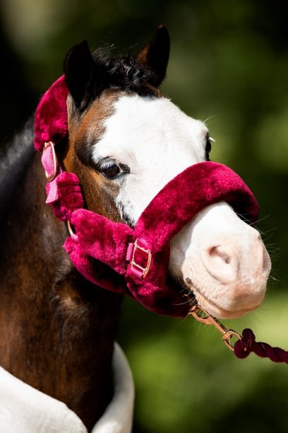 HB Showtime allround fluffy rose/gold headcollar