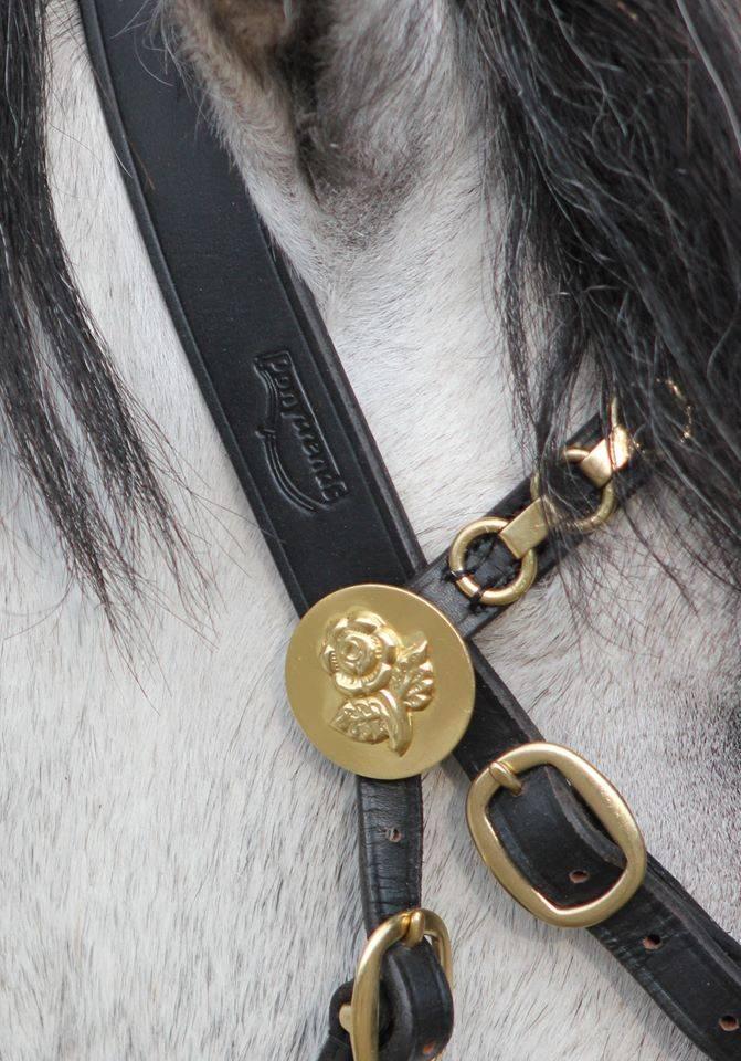 Ponytrends Roosjes