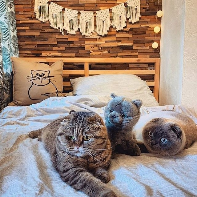 Warum Holzverblender in Ihrem Schlafzimmer nicht fehlen sollten