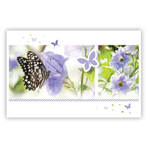 Grußkarte 'lila Schmetterlinge'