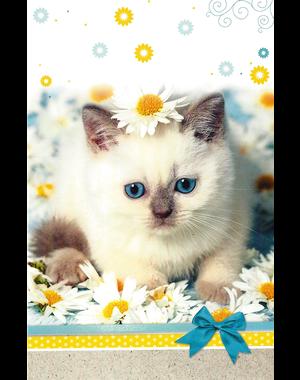 Universal Greeting Card (11x17cm)