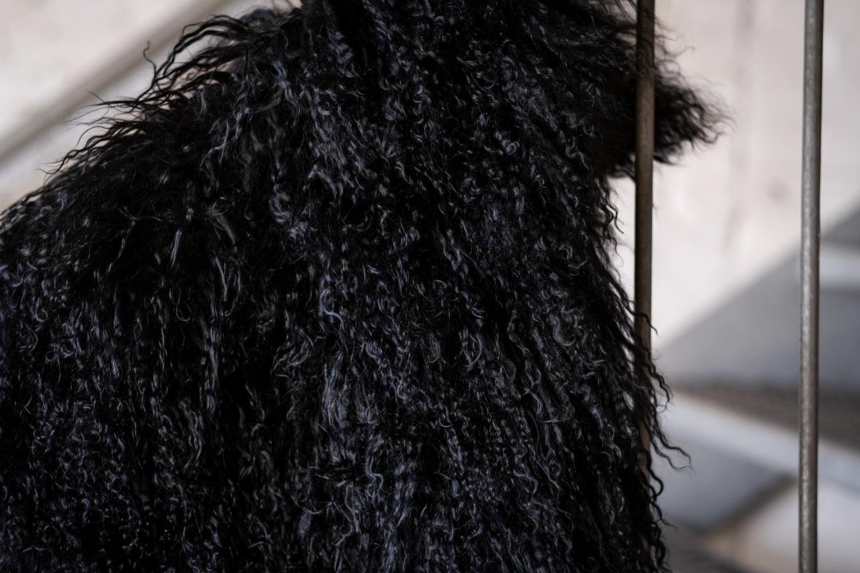 testVan Buren Schapenvacht zwart Tibetaans met gekrulde lange haren