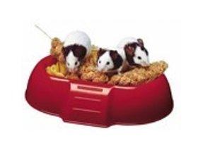 Mice Feeders